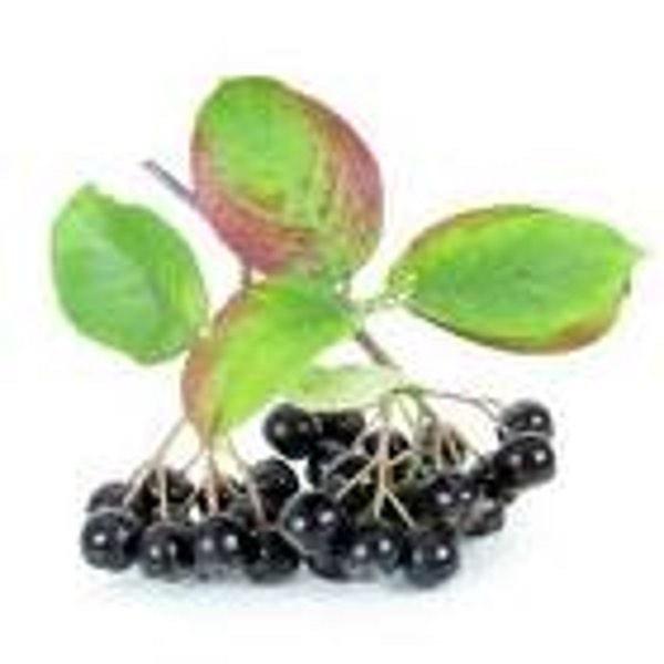 Арония черноплодная (плоды) 100 гр